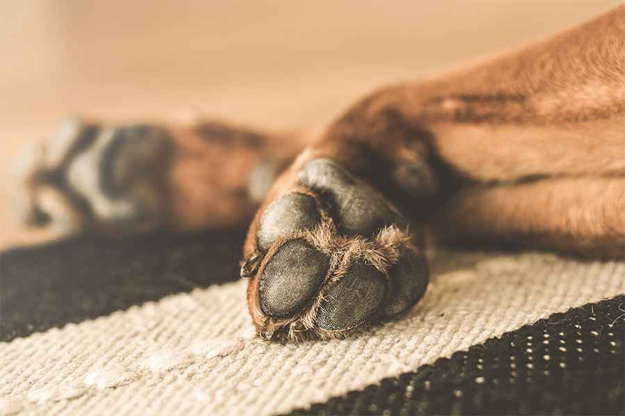dogs paws on a rug
