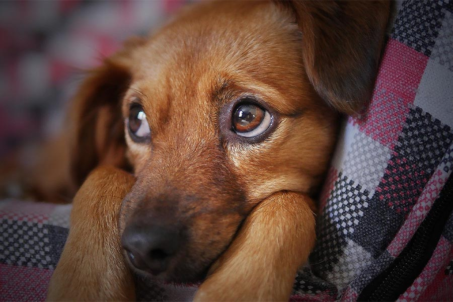 How to help dogs with sensitive stomachs